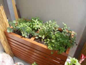 Hochbeet Balkon Vergleich Tipps Empfehlungen